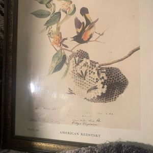 Vintage Wall Art - Birds of America by J Audobon set 2 lithographs